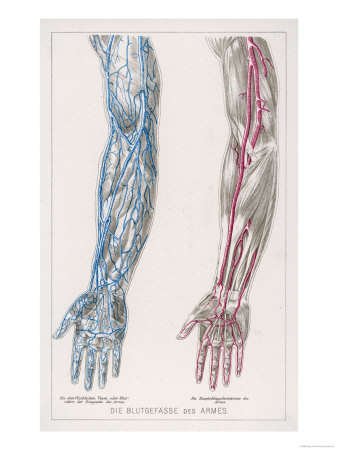 Arm Veins Diagram http://blackpoppymag.wordpress.com/a-z-of-health/injecting-in-the-hands/