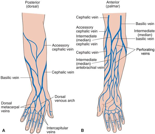 injecting in the hands black poppy\u0027s junk mail Hand Veins in Wrist and All Names look here for your vein road map and check out the other image near the end of the article we are still hunting for the best image of hand veins,