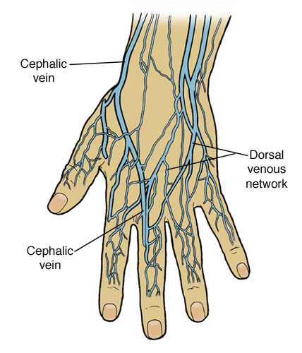 Image result for a hand full of veins images