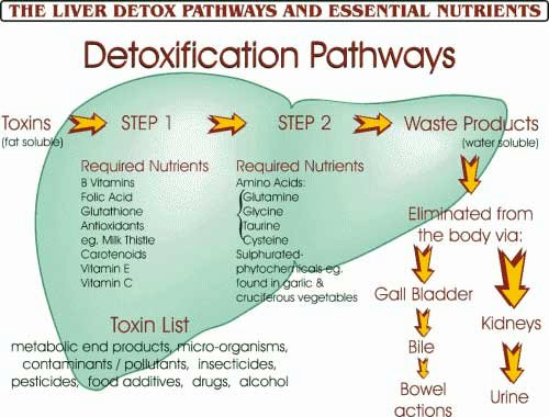 http://blackpoppymag.files.wordpress.com/2011/01/liver-detox-lg.jpg