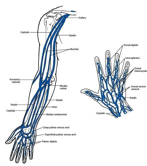 right hand veins