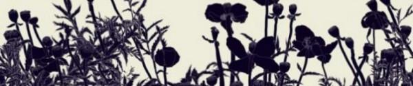 cropped-poppy4.jpg