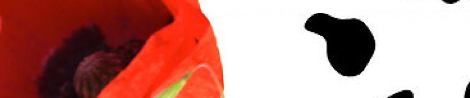 Stimulant Induced Skin Picking | Black Poppy's Junk Mail